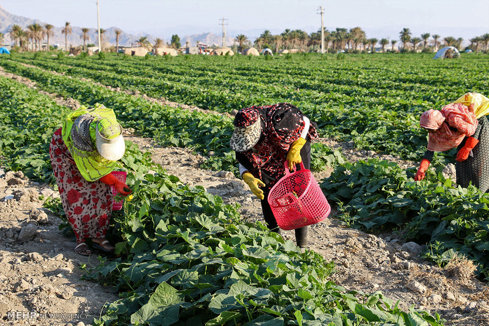 قش پلی آمین ها در پس از برداشت محصولات باغبانی