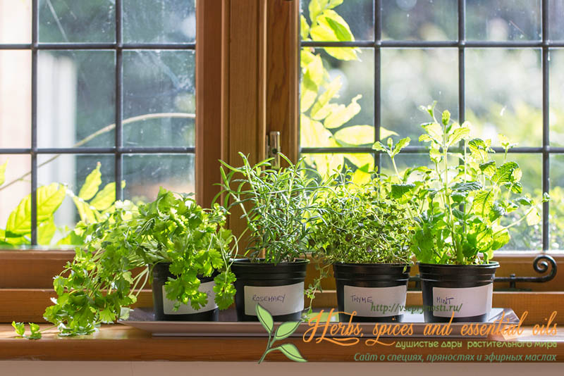 ارزیابی درمانهای مبتنی بر باغبانی در افسردگی